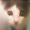 1001_162437757_avatar