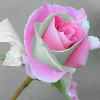 1001_753354604_avatar