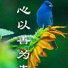 1001_49353918_avatar