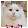 1001_75005704_avatar