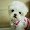 1001_147404368_avatar
