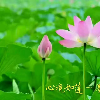 1001_1107156943_avatar