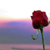 1001_415315915 large avatar
