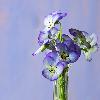 1001_1487693981_avatar