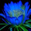 1001_31226015_avatar