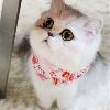 1001_488072034_avatar