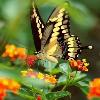 1001_643383228_avatar