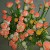 1001_389143240_avatar