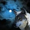 1001_1784168936_avatar