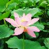 1001_411161159_avatar
