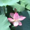 1001_1496378159_avatar
