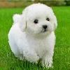 1001_1223762291_avatar