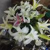 1001_1187128420_avatar