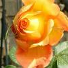 1001_749388429_avatar