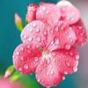 1001_438842945_avatar