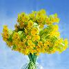 1001_193428310_avatar
