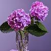 1001_1353811409_avatar