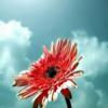1001_190706513_avatar