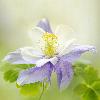 1001_1407256248_avatar