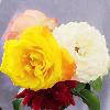 1001_1430109757_avatar