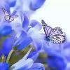 1001_19143353_avatar
