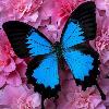 1001_1681904464_avatar