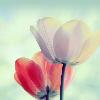 1001_729874510_avatar