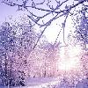 1001_1855233705_avatar