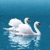 1001_1871500655_avatar