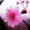 1001_162013555_avatar