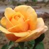 1001_1769857770_avatar