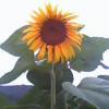 1001_749161331_avatar