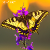 1001_436348785 large avatar