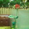 1001_1574744528_avatar