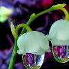 1001_265044113_avatar