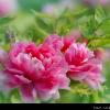 1001_143608908_avatar