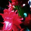 1001_1044588484_avatar