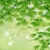 1001_1029796242_avatar