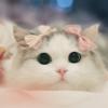 1001_14087929_avatar