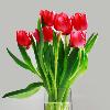1001_1490957617_avatar