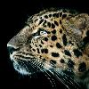 1001_830242446 large avatar