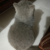 1001_514200157 large avatar