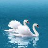 1001_2042218734_avatar