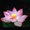 1001_1446724443 large avatar