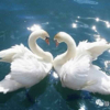 1001_1142804363_avatar
