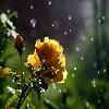 1001_324542200_avatar