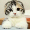1001_1865665820_avatar