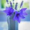 1001_15562023353_avatar