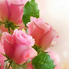 1001_486170594 large avatar