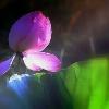 1001_144879697_avatar